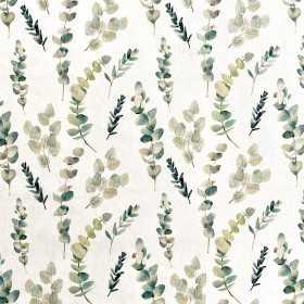 Jersey Eukalyptus Pflanze