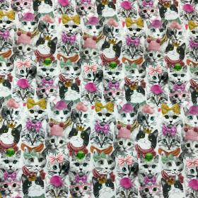 Jersey Katzen